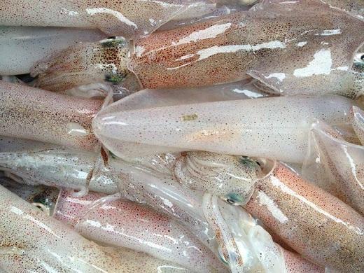 Mực ống biển Quảng Ngãi